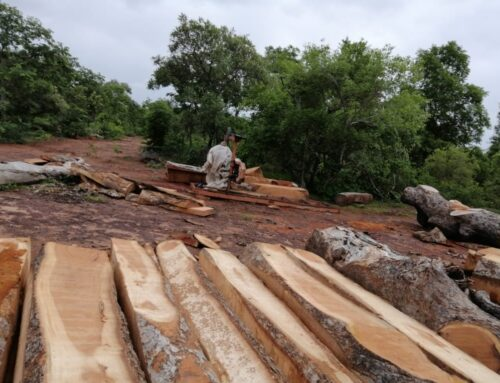 (Opinion) World Environment Day: Jeremiah narrates how he has been threatened by his own people in his attempt to fight illegal wood logging