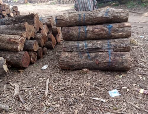 Rosewood still in full force harvesting, processing and transportation